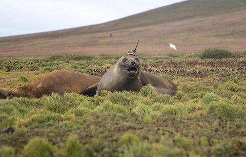 Grassland, Wildlife, Ecoregion, Steppe, Tundra, Terrestrial animal, Prairie, Plain, Adaptation, Pasture,