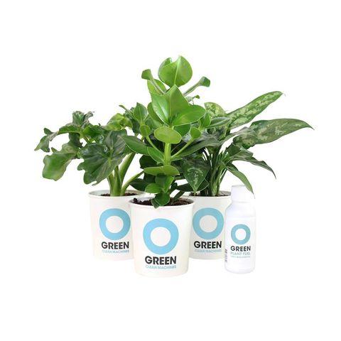 Plant, Flower, Flowerpot, Leaf, Houseplant, Flowering plant, Herb, Grass, Font, Leaf vegetable,