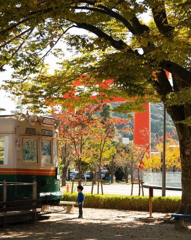 京都・岡崎公園付近 色づく樹々