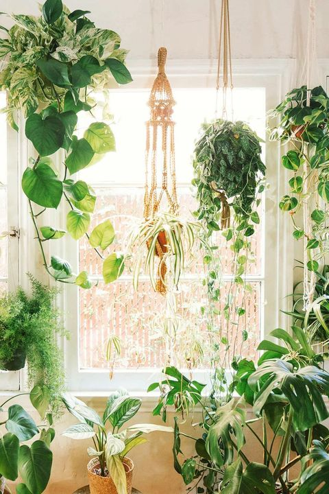 Marvelous 11 Greenhouse Design Ideas To Flex Your Green Thumb In Style Interior Design Ideas Philsoteloinfo