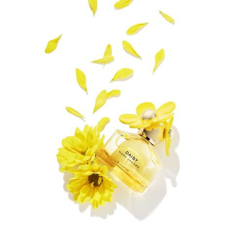 Yellow, Honeybee, Flower, Bee, Plant, Petal, Pollinator, Cut flowers, Membrane-winged insect, camomile,