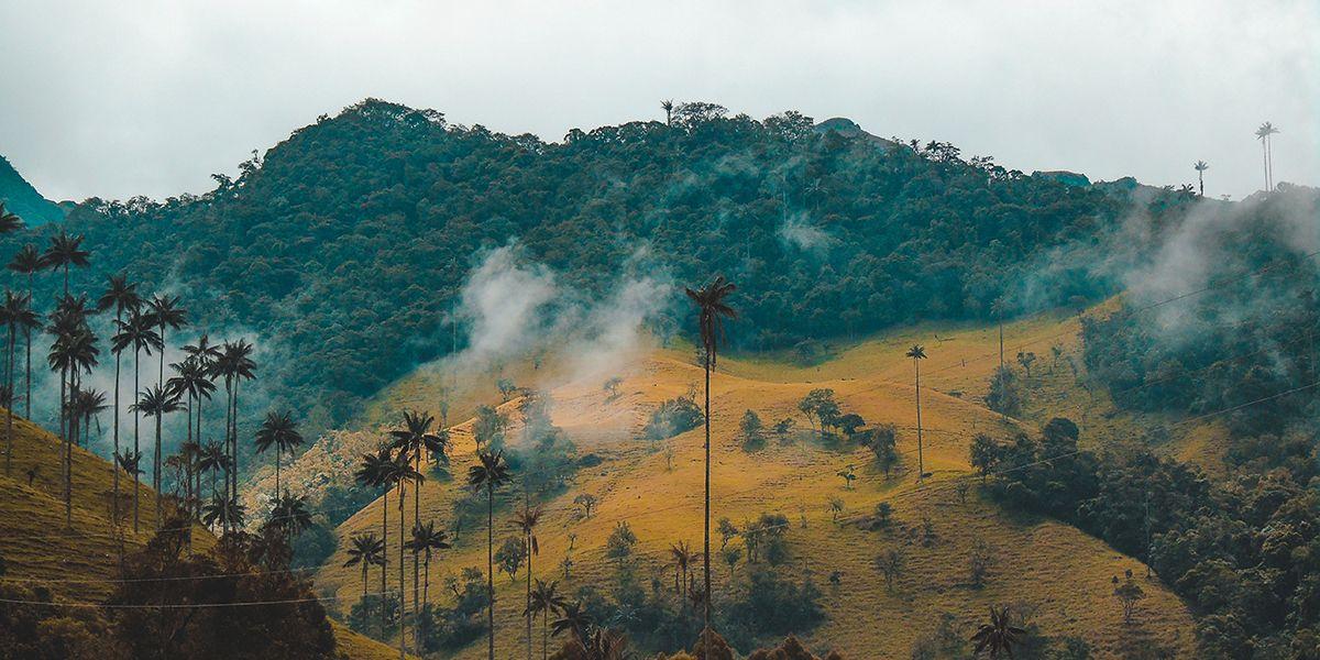 Olio di palma fa male alla salute e all'ambiente: come smettere di consumarlo