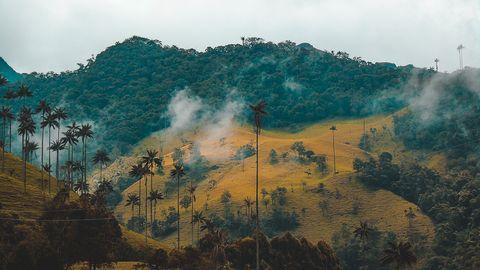 L'olio di palma è la nuova plastica, e dovremmo smettere di consumarlo (anche in fretta)