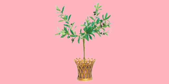 faux olive tree with gold planter and pink background