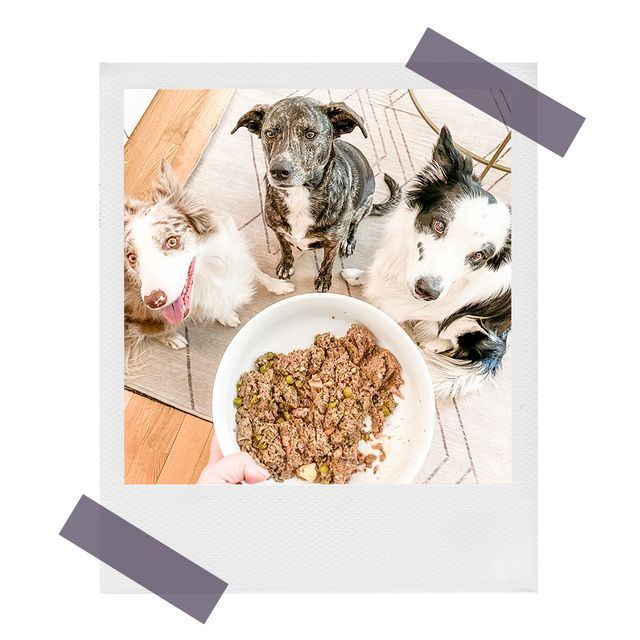 megan's 3 dogs waiting to eat beef recipe