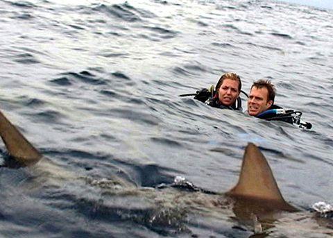 Recreation, Shark, Fish, Marine mammal, Cartilaginous fish, Vehicle, Boating, Great white shark, Wind wave, Lamniformes,