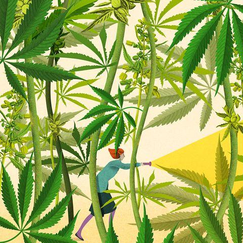 Plant, Leaf, Flower, Flowering plant, Hemp family, Hemp, Terrestrial plant, Plant stem, Houseplant, Service,