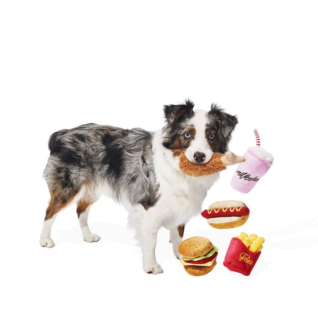 Dog breed, Carnivore, Dog, Dog supply, Bowl, Companion dog, Sporting Group, Cuisine, Working animal, Puppy,