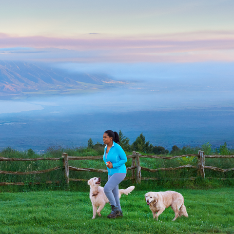 Sky, Grassland, Highland, Hill, Pasture, Grass, Mountain, Cloud, Fell, Morning,