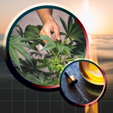 Leaf, Herbal, Plant, Houseplant, Herb, Flower, Hand, Soil, Flowerpot, Hemp family,