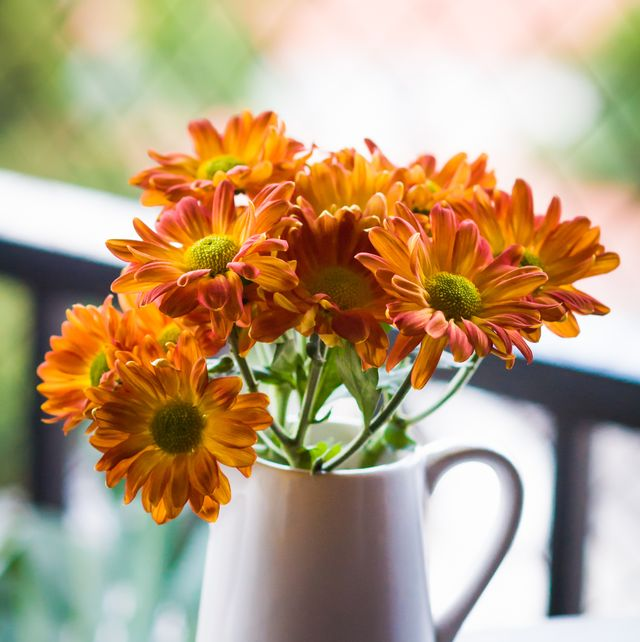 an adorable milk jug with bright orange chrysanthemum flowers decorating the sill of  apartment window
