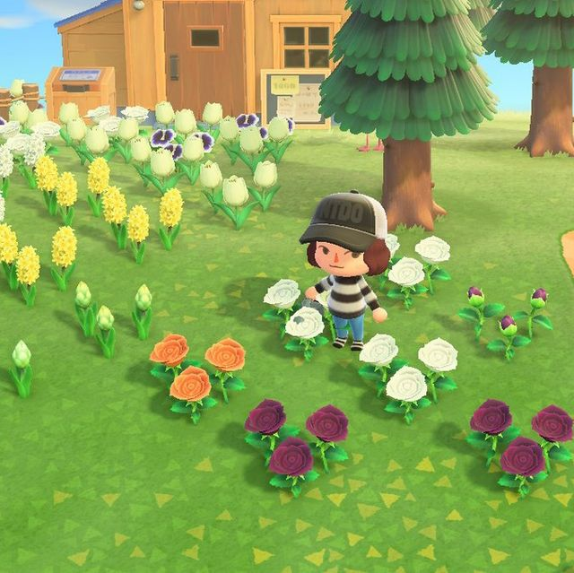 How To Grow Animal Crossing Flowers Flower Breeding Layout
