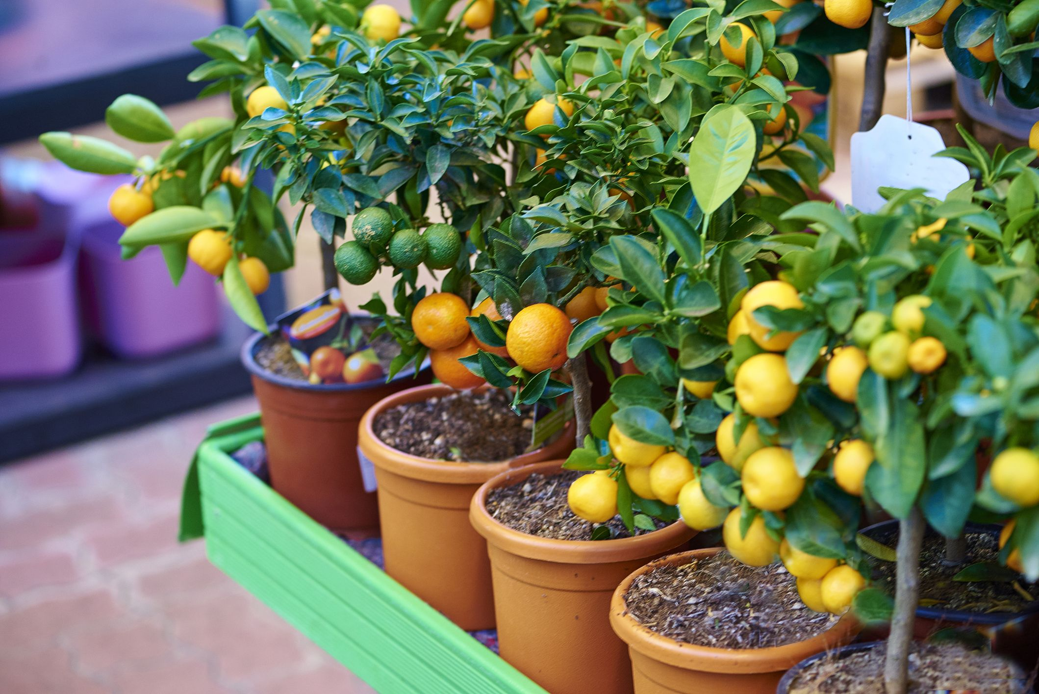 8 Fruit Trees You Can Grow Right On Your Porch
