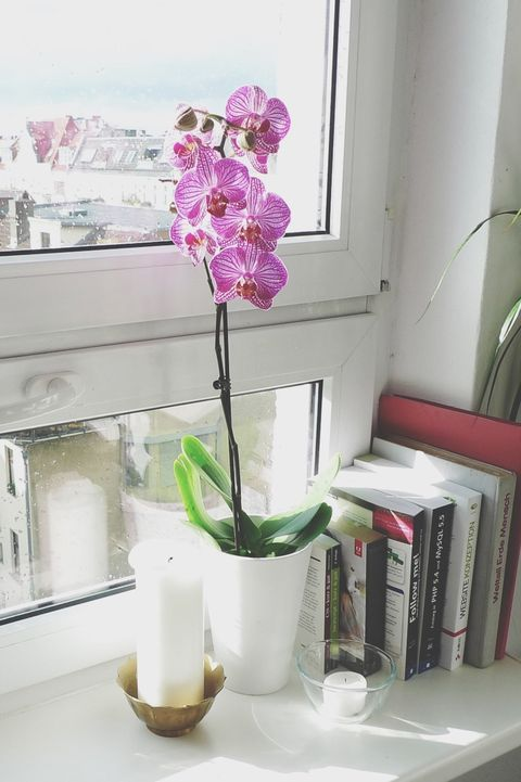 Orchid Flower On Window Sill