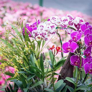 fin, haut, rose, orchidée, fleurs, fleurir, fleur, jardin