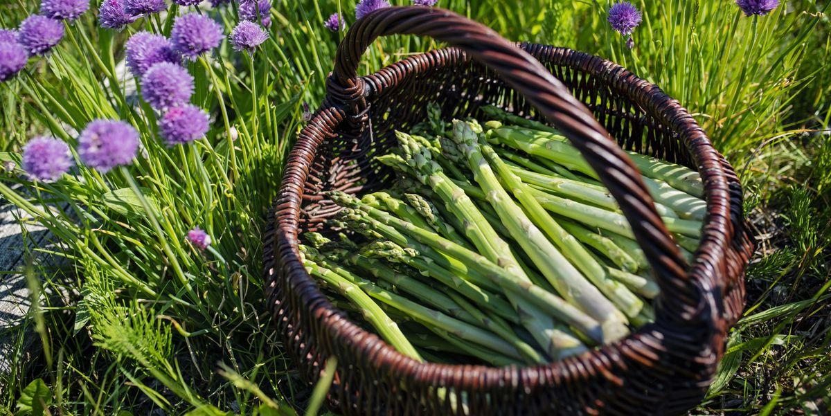 How to Grow Asparagus – Tips for Planting Asparagus