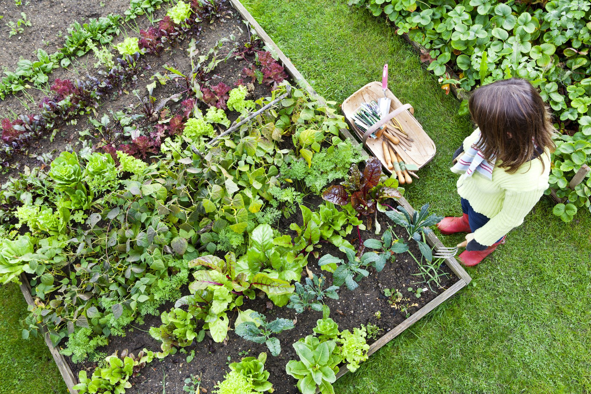 No dig gardening: Charles Dowding on why a no dig garden is better for the environment