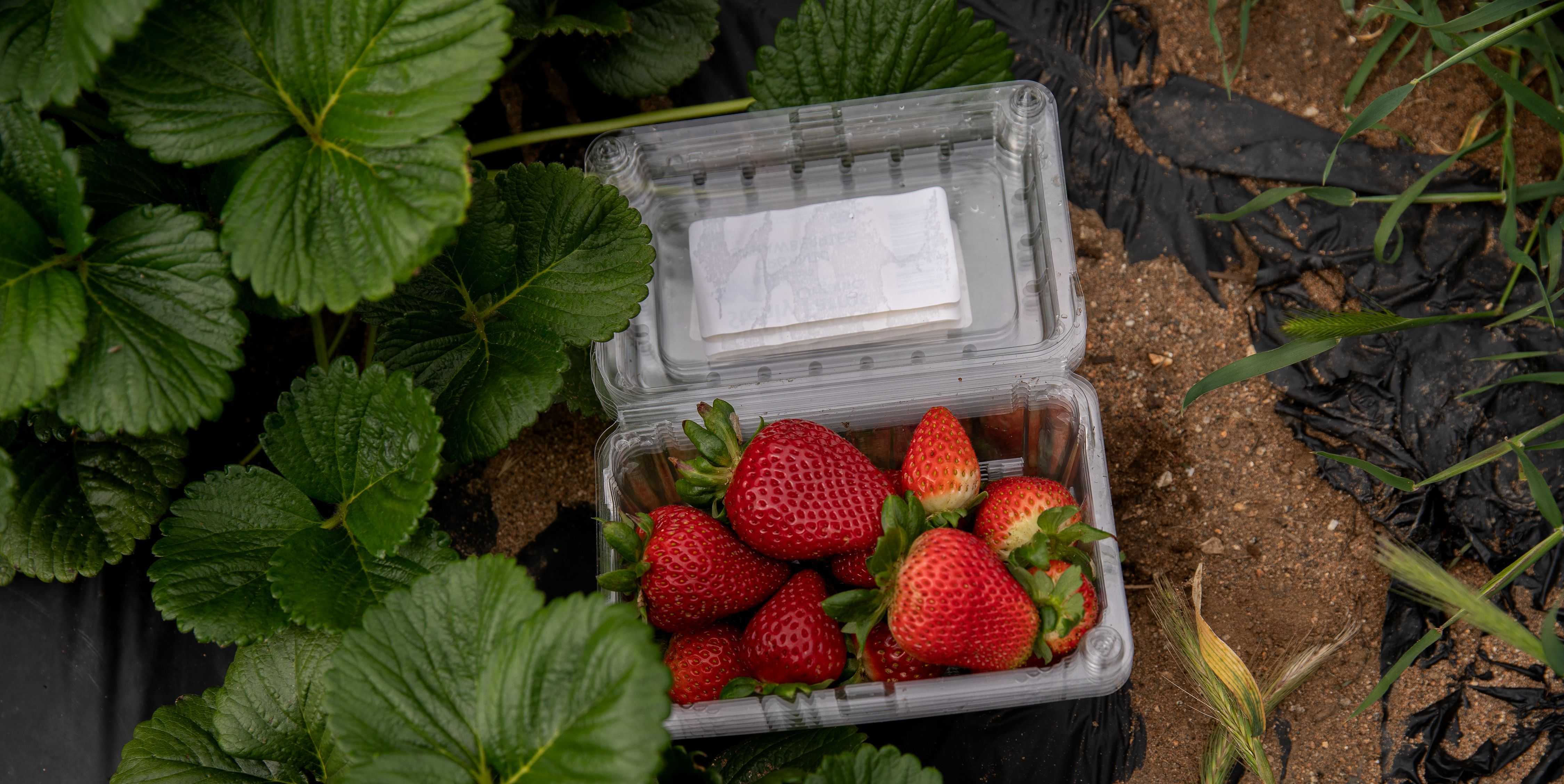 Dirty Dozen List 2020 – List of Produce With Pesticides, According to the EWG