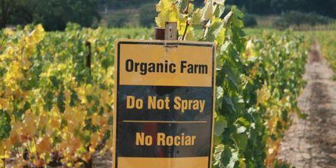 Sign at an organic farm