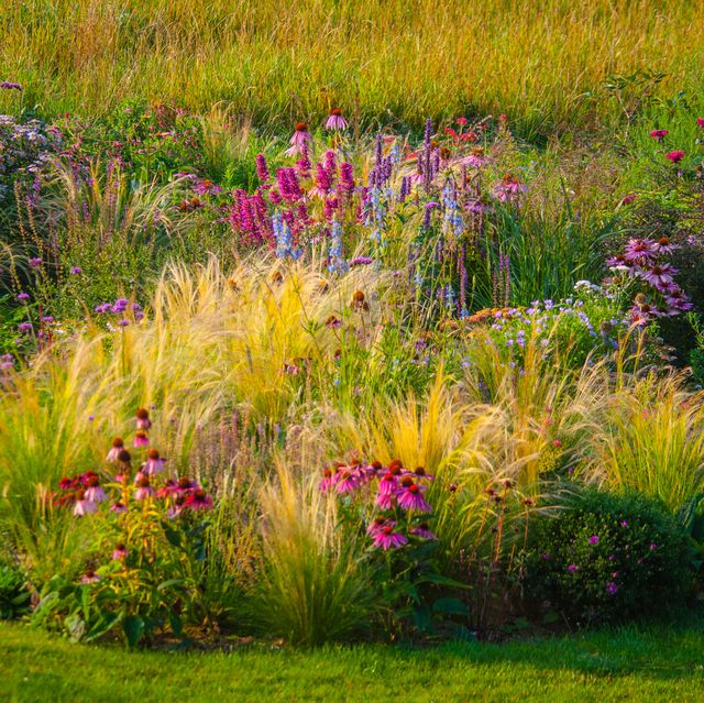 ornamental garden, with grasses and various perennial flowers in mixed borders and flower beds designed in such a way to provide natural color patterns, and a sense of naturalistic landscape