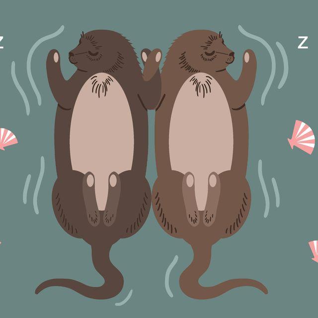 How animals sleep - Silent Night campaign