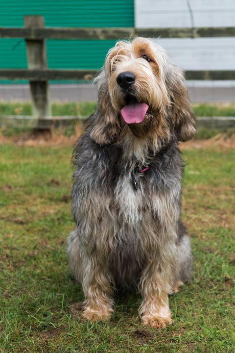 13 Rare Dog Breeds That Make Great Pets Rare Large