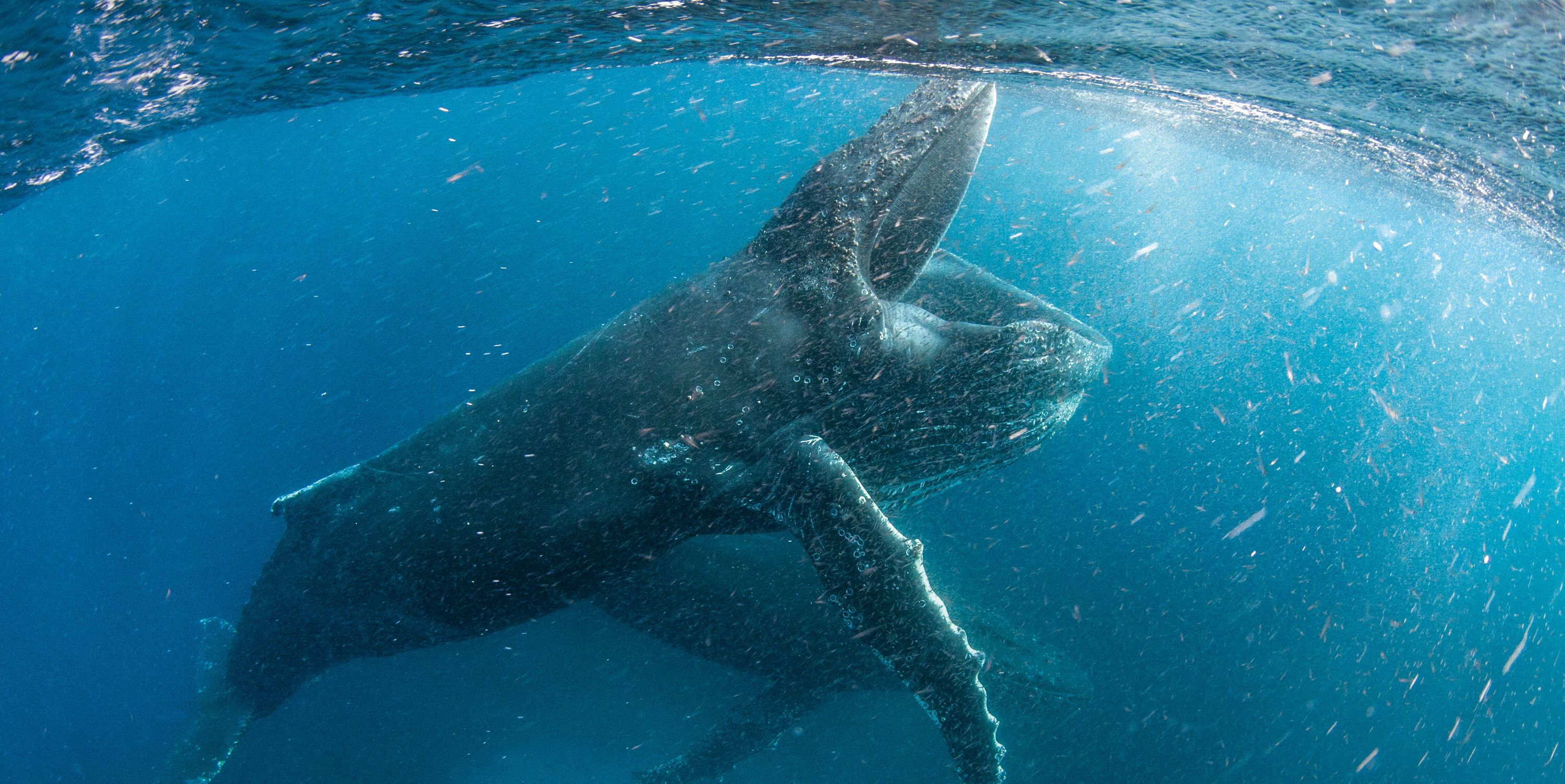 Our Planet, David Attenborough, Whales