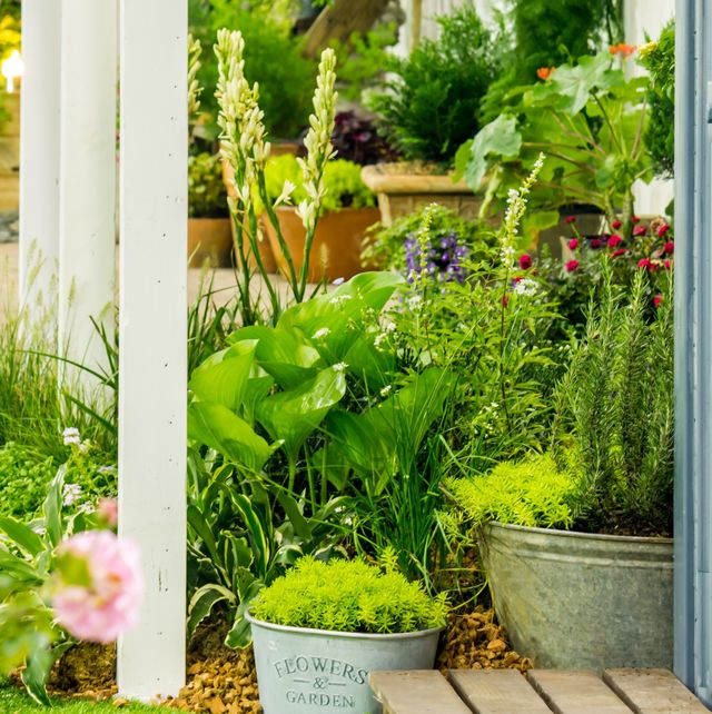 garden with container plants