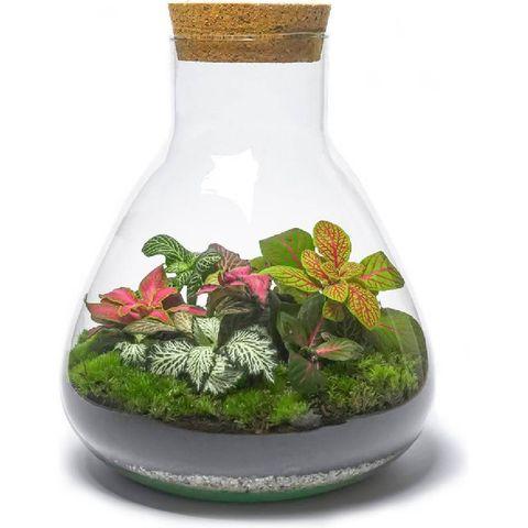 outlandish terrariums diy kleurrijk fittonia terrarium