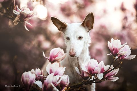 The Kennel Club photography competition