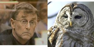 Michael Peterson The Staircase owl theory
