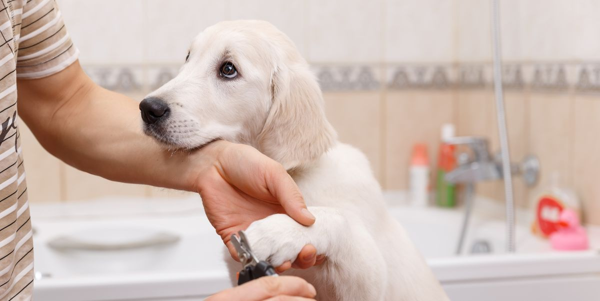 Expert Tips For Grooming Your Dog At Home