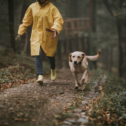 Owner on a walk with dog