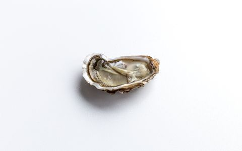 oyster isolated on a white background