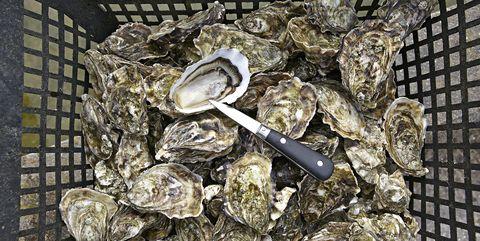 oyster vending machine france