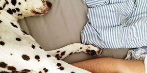 犬 ベッド,  愛犬 一緒に寝る,  犬と寝る,  犬 寝不足,  犬 一緒に寝る,