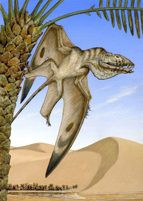 new pterosaur byu