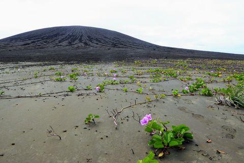Plant, Flower, Shield volcano, Stratovolcano, Ecoregion, Volcanic landform, Wildflower, Volcanic field, Hill, Landscape,