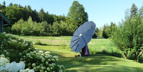 Lawn, Grass, Garden, Shrub, Biome, Tree, Leaf, Botany, Plant, Botanical garden,