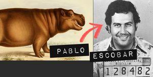 pablo-escobar-nijlpaard-colombia