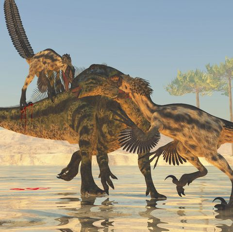 a pack of deinonychus dinosaurs attack a tenontosaurus during the cretaceous period of north america