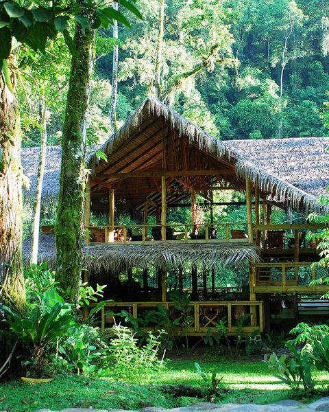 Jungle, Vegetation, Natural environment, Forest, Nature reserve, Tree, House, Rainforest, Building, Biome,