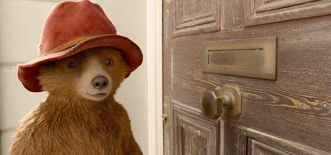 Door, Canidae, Door handle, Headgear, Sporting Group, Room, Window, Hat, Dog breed, Fawn,