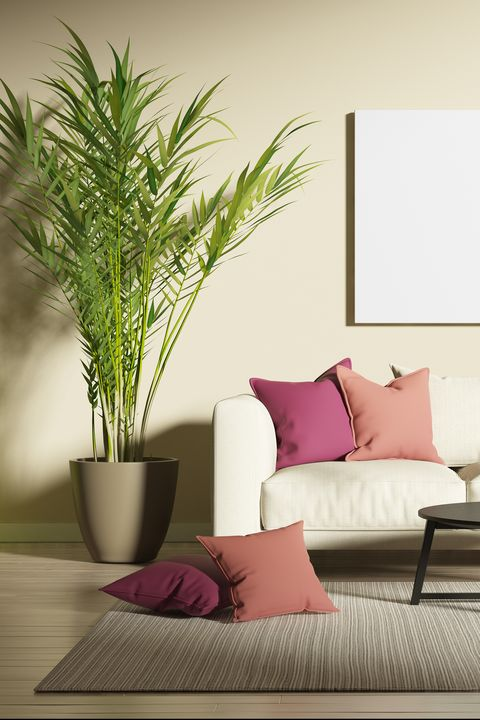 Room, Furniture, Living room, Interior design, Wall, Purple, Table, Couch, Plant, studio couch,