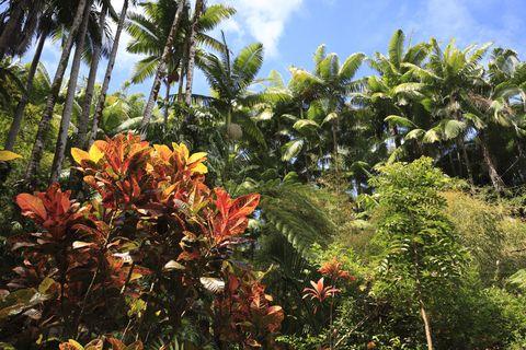 Palm Tree And Plant, Hawaii, U.S.A.