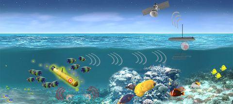 Underwater, Ocean, Natural environment, Marine biology, Organism, Reef, Snorkeling, Sea, Recreation, Coastal and oceanic landforms,