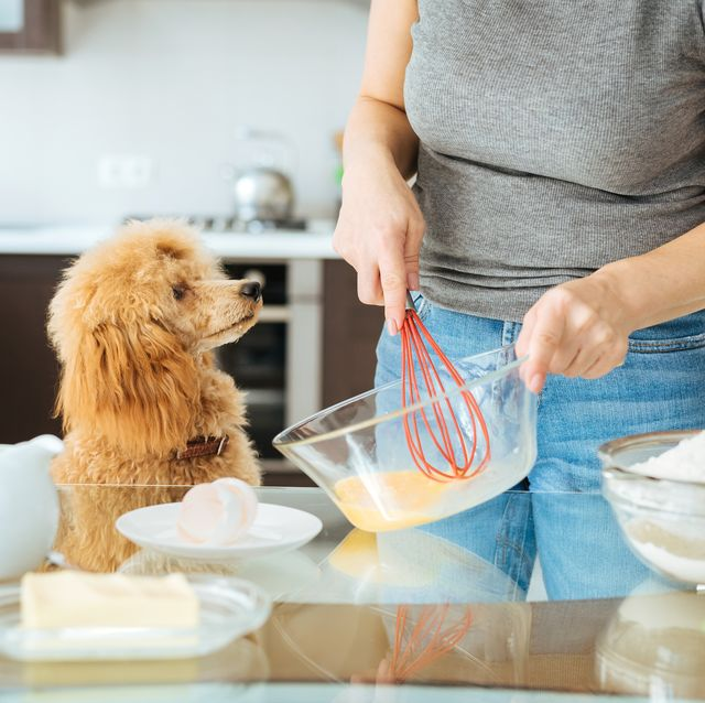can dogs eat pancakes this pancake day