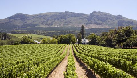 Four of the best Cape Town wineries to visit