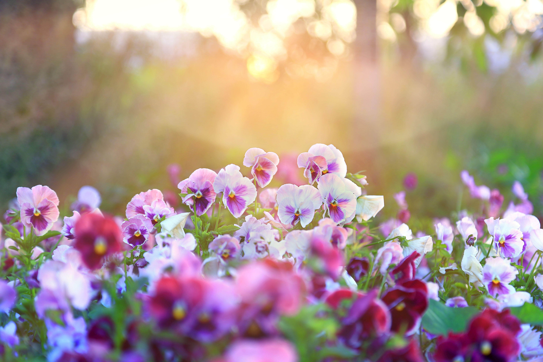Best Autumn Plants 7 Autumn Flowering Plants For Your Garden
