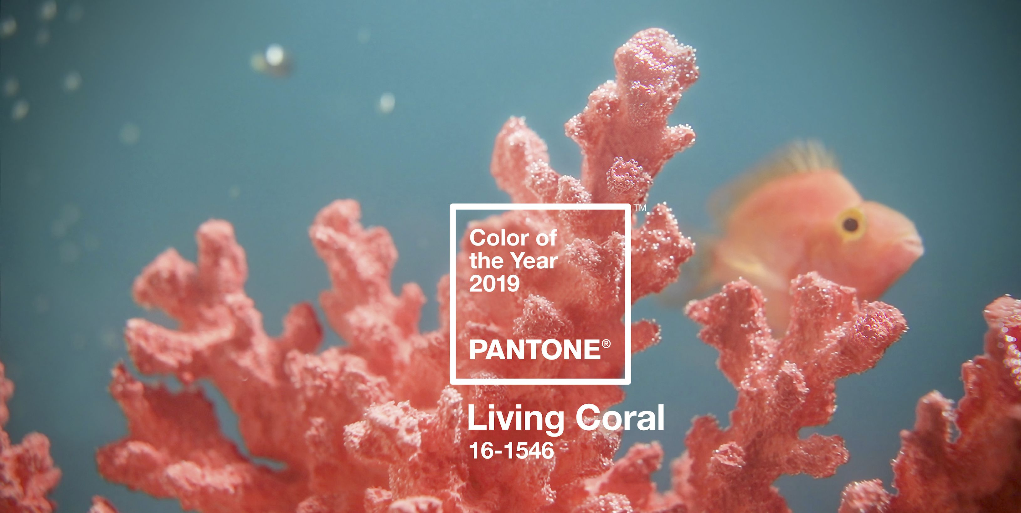 Pantone Just Released Their Color of the Year for 2019